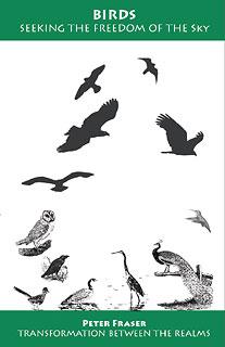 Fraser P. - Birds, Seeking the Freedom of the Sky
