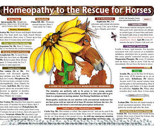 Whitney L. - Homeopathy to the Rescue for Horses chart/poster