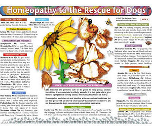 Whitney L. - Homeopathy to the Rescue for Dogs chart/poster
