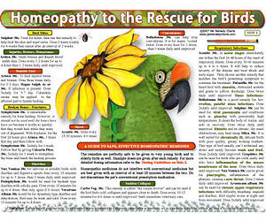 Whitney L. - Homeopathy to the Rescue for Birds chart/poster